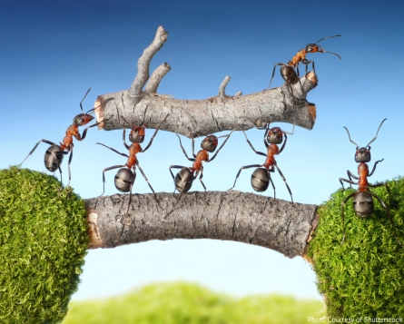 new ways of thinking ants